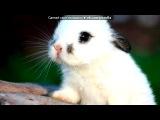Песня про зайцов на поминает о моём зайце =(